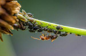 סוגים שונים של חרקים