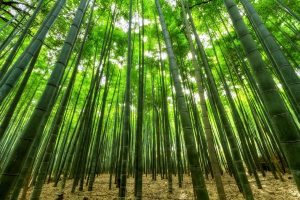 עצי במבוק ראשית